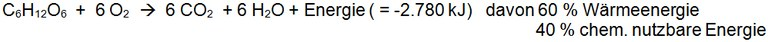 bild_faktoren_grundumsatz.jpg