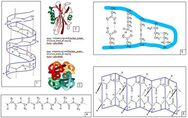 Proteine Denaturierung übungsaufgaben
