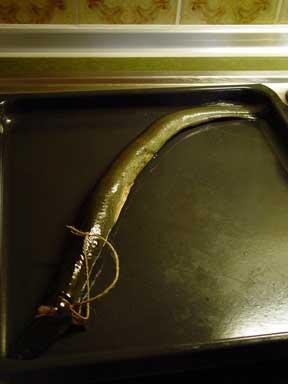 Aale mit einer Haushaltsschnur binden
