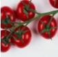 Bild 3arbeitsbl_tomate.jpg
