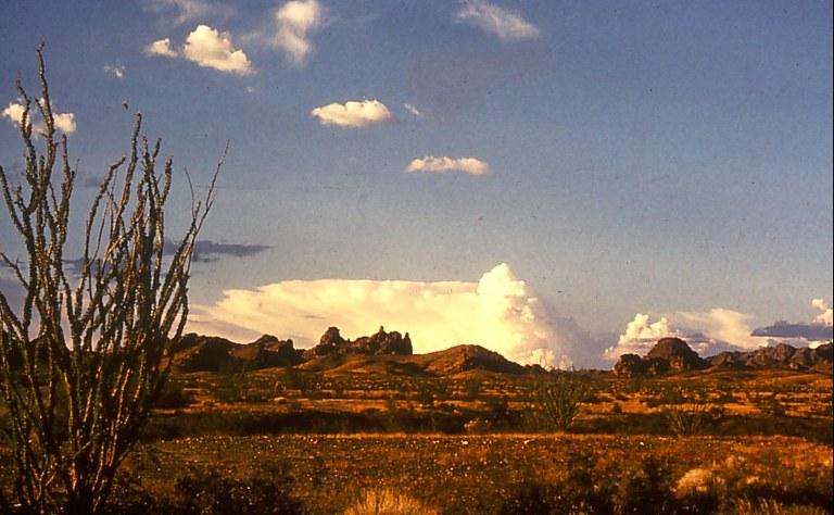 arizona desert2.jpg