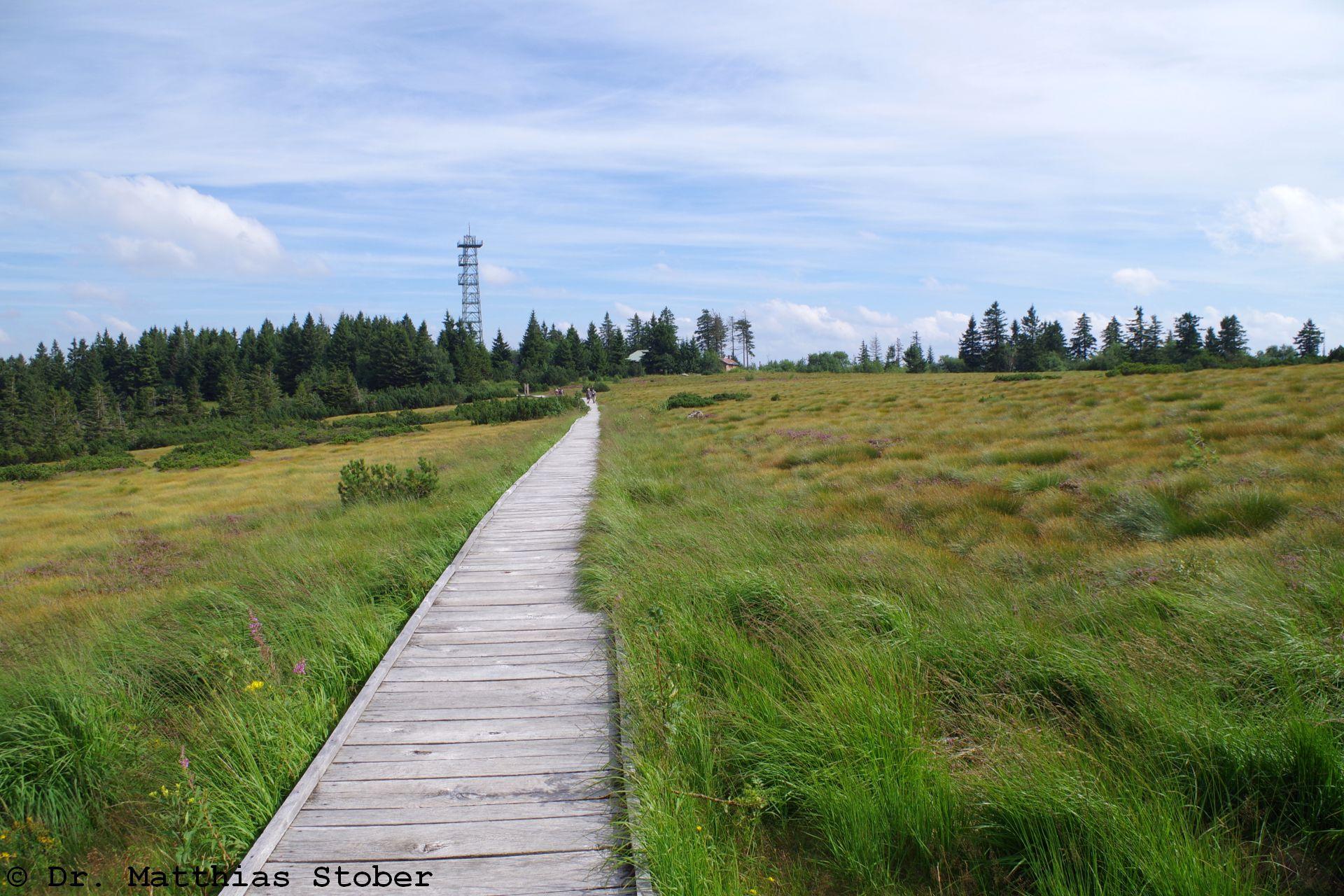 Wanderweg über das Hochmoor der Hornisgrinde