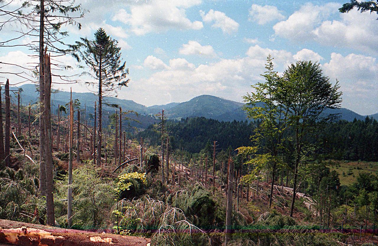 Schwarzwald nach dem Orkan