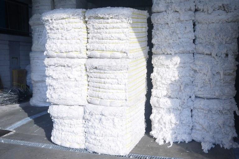 cotton.jpeg