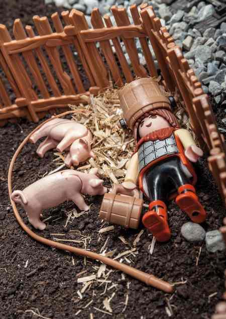 Ein betrunkener schläft seinen Rausch bei den Schweinen aus