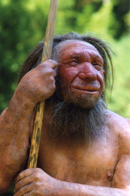 Neandertaler: Nachbildung im Museum