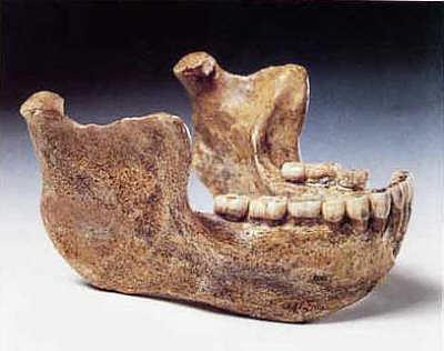 Unterkiefer des Homo Heidelbergensis aus Mauer (Rhein-Neckar-Kreis)