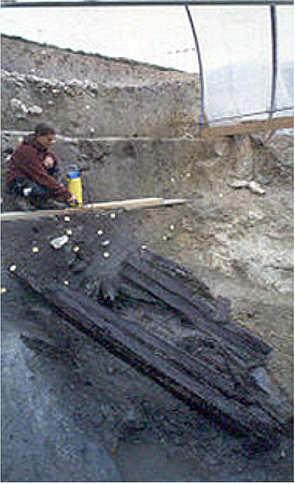 Archäologie: antike Hölzer