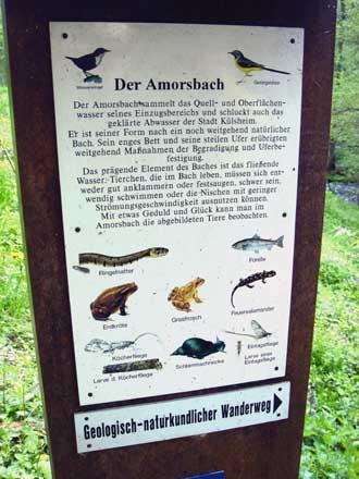 Infotafel zur Fauna am Amorsbach