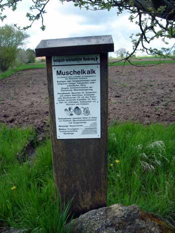 Infotafel zum Muschelkalk