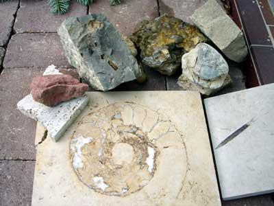 Im Vordergrund zwei gesägte und polierte Jurakalke, dahinter v. l. n. r.: Buntsandstein, drei Muschelkalke, Keupersandstein aus dem Trias