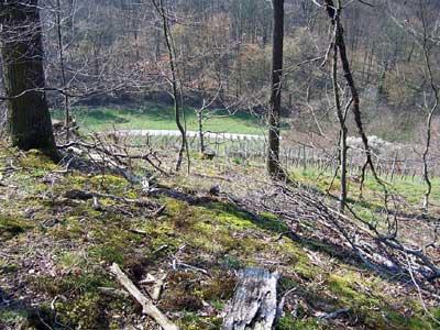 Blick vom äußersten Spornende des Plateaus der Harchenburg