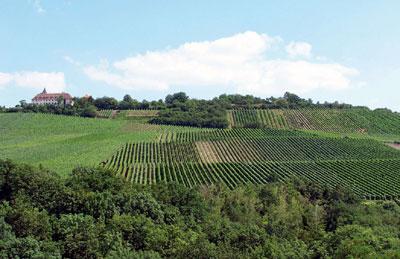 Michaelsberg bei Cleebronn