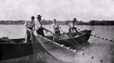 Zugnetzfischer am Untersee um 1900