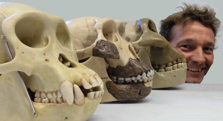 Homo sapiens mit Schädelmodellen rezenter und fossiler Verwandter