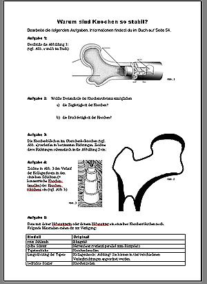 Arbeitsblatt Knochenaufbau