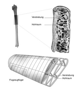 Bauprinzip eines Flugzeugflügels