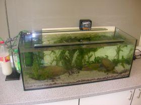 Frisch bepflanztes Aquarium