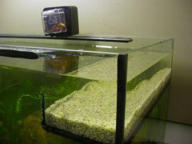 Sumpfbereich in Trog aus eingeklebten Glasscheiben