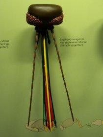Mundwerkzeuge einer Stechmücke (Rosenstein-Museum)