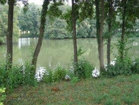 Der Riedsee