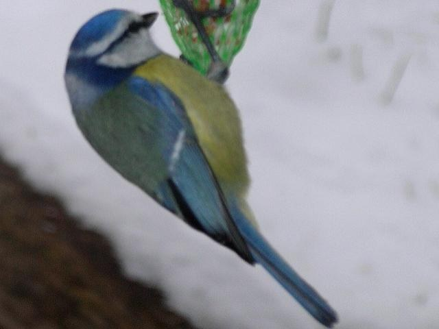 vogel_9.jpg