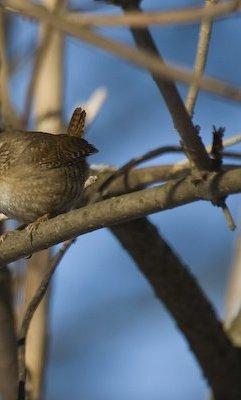 Vogel e Seite
