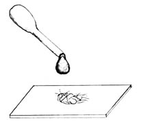 Einen Wassertropfen auf das Objekt bringen