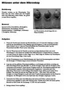 Vorschau Arbeitsblatt Mitose