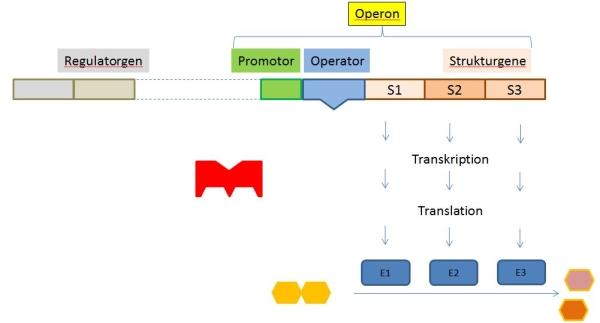 Substratinduktion