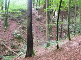 Typisches Biotop von Feuersalamandern