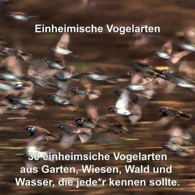 Einheimische Vogelarten