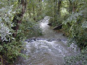 Wiesenbach mit Auwaldstreifen