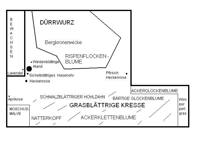 Pflanzplan Biotop Waldsaum Schickhardt-Gymnasium