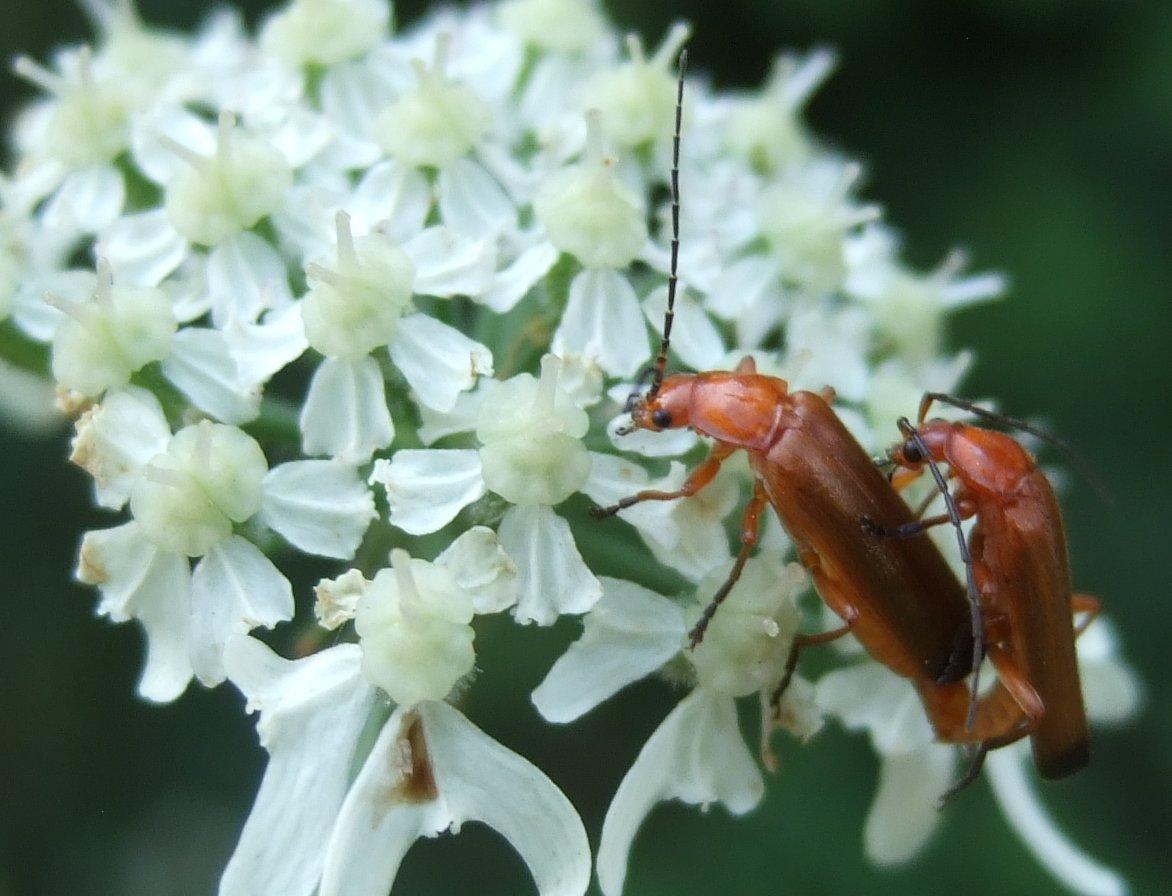 andere insektengruppen die bl tenpflanzen best uben landesbildungsserver baden w rttemberg. Black Bedroom Furniture Sets. Home Design Ideas