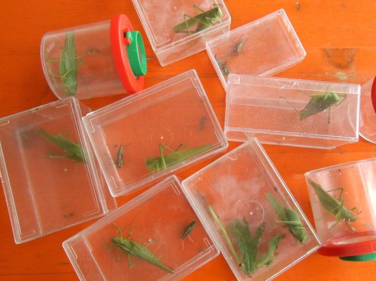 tettigonia_viridissima2_1024.jpg
