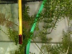 aquarium_thermometer_280.jpg