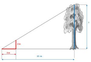 Wie hoch ist der Baum