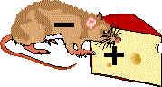 Maus (Elektron) Käse (positive Ladung) (5k)