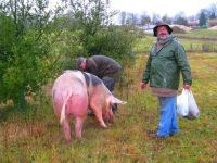 truffe-noire-cochon.jpg