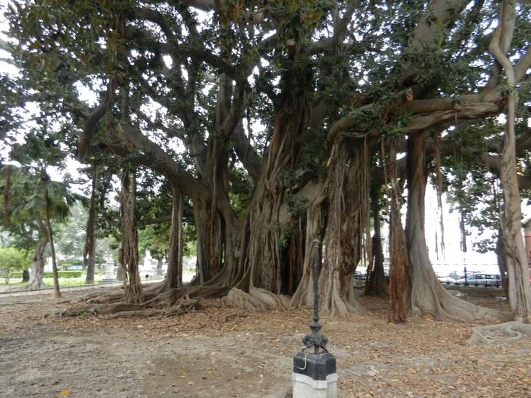 Palermo, Orto botanico