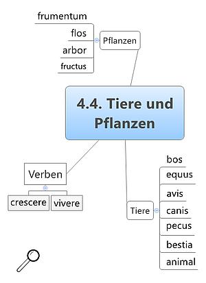 Grundwortschatz Latein Tiere und Pflanzen