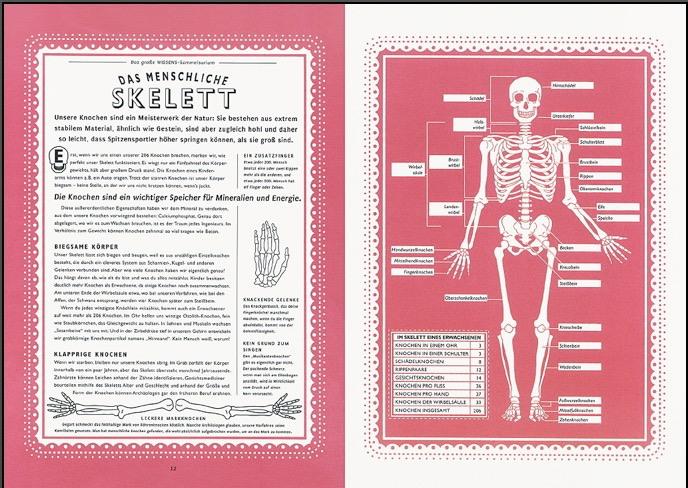 skelett_k.jpg
